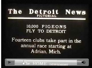 10000pigeons